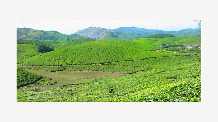 Scenic Beauty of Munnar