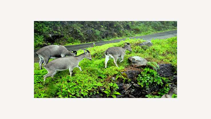 Eravikulam National Park-