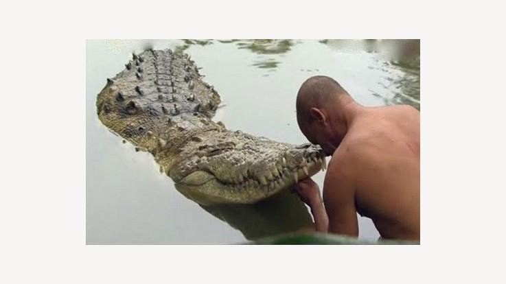 Temple Crocodile Babia