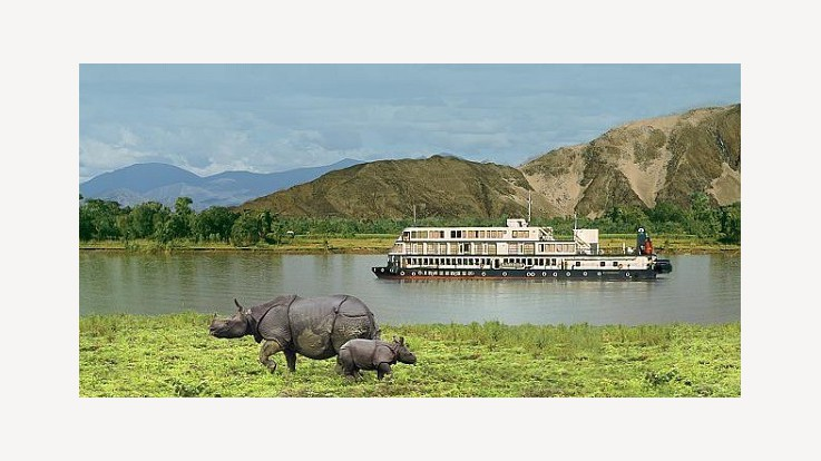 Cruise and Rehinos