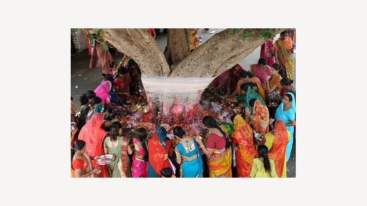 Significance of Vat Savitri Puja